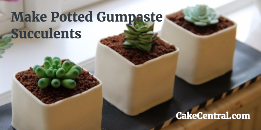 900_how-to-make-potted-gumpaste-succulen