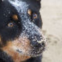 mgdsue02 Cake Central Cake Decorator Profile