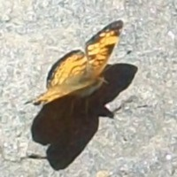 BuggyPoo Cake Central Cake Decorator Profile