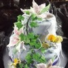 Jmstellar Cake Central Cake Decorator Profile