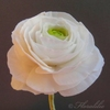 Floralilie Cake Central Cake Decorator Profile