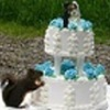 Zahrah  Cake Central Cake Decorator Profile