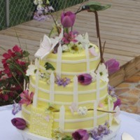 daltonam Cake Central Cake Decorator Profile