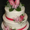wendydaisy Cake Central Cake Decorator Profile