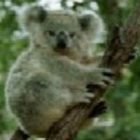 koalabear Cake Central Cake Decorator Profile