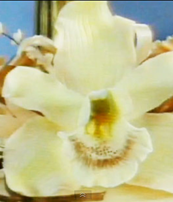 Making Sugar Orchids