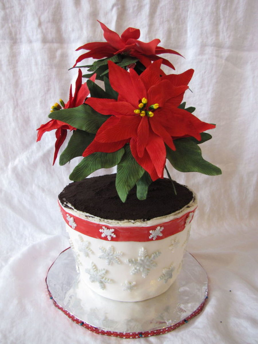 Christmas Poinsettia Cakes