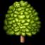 deciduous_tree.png