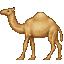 dromedary_camel.png