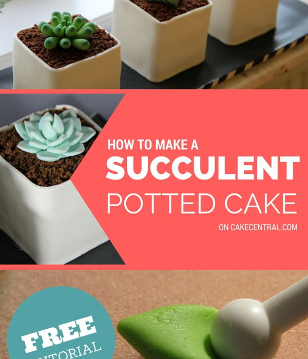 How to Make Potted Gumpaste Succulent