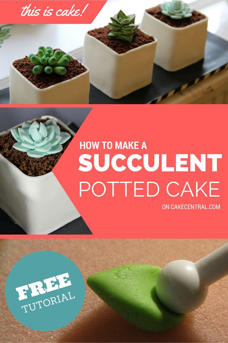 How To Make Potted Gumpaste Succulent Cakecentral Com