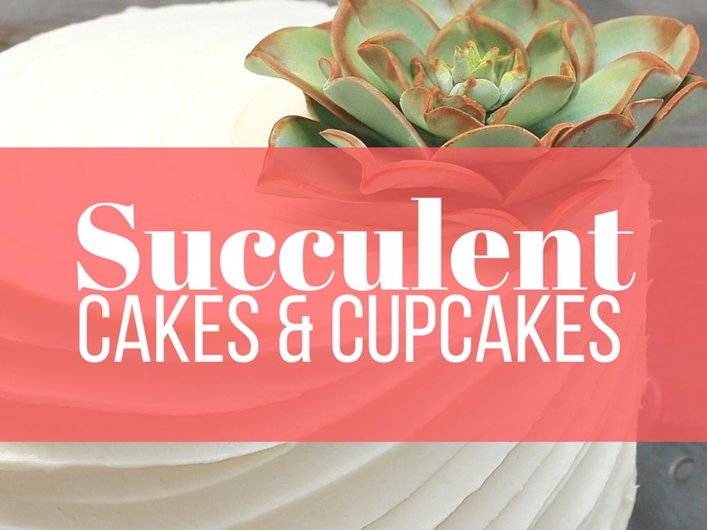 Succulent Cakes Too Pretty To Eat - CakeCentral.com