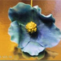 Blue Poppy Gumpaste blue poppy, shadowed with powdered color.