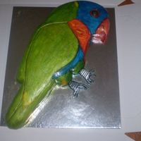 Rainbow Lorikeet Rainbow Lorikeet cake. Made in a hurry and I forgot to define his tail feathers. Didn't realise until I had seen the photo.