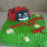 "Ladybug Cake All Buttercream. 10"" square and pampered chef batter bowl."