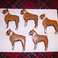 Boxer Cookies   chocolate rolled cookies with antonia's icing.