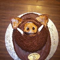 Hog Wild This was for a client's son who loved hog hunting. It was chocolate butter cake with chocolate buttercream & MMF. It was kind of...