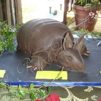 Armadillo Grooms cake, of course red velvet cake. The head, feet and tail are all cake....