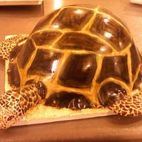 "Sea Turtle Cake I used 1/2 of a ball cake plus an 8"" layer underneath. Added a LOT of buttercream to give it shape, then covered in fondant. The legs..."