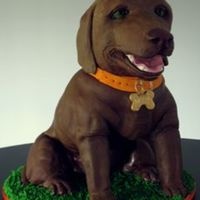 Chocolate Lab Sculpted chocolate lab. PVC armature RKT head cake body.