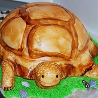 Sammy The Turtle Made this for a childs birthday. vanilla cake with cream cheese filling, carved, covered with buttercream and fondant, colored with gel...