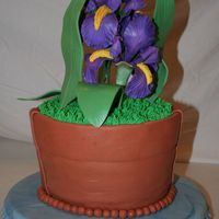 "Iris Flower Pot Idea came from ""Sweet Celebrations"" by Sylvia Weinstock & Kate Manchester. Irises were made from gumpaste using Nicholas..."