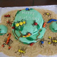 Bug Cake  Bug cake for my 5 year old and 2 year old's party. I made two cupcakes on the side for each of their candles. Buttercream frosting,...