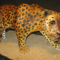 "Leopard Sculpted leopard...measured 15.5"" high and 30"" long!! head and belly are rkt, the rest is cake...covered in fondant, lightly..."