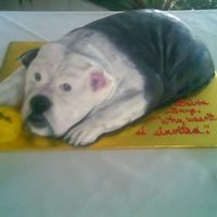 Bulldog Chocolate cake covered with fondant. Airbrushed and hand painted.