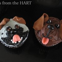 Puppy Cuppies Pug and 'chocolate' lab cupcakes!