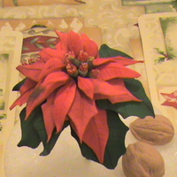 Pointsettia My first pointsetta, made out of gum paste.Thanks for your help Loucinda