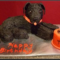 Black Labrador Cake Black Labrador cake made from the Wilton lamb pan and extra cake pieces. Ears and tip of nose are fondant. Icing is buttercream dream with...