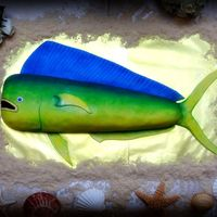 Top View Of Dolphin Fish Grooms Cake Top view.