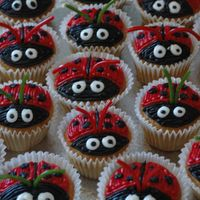 Ladybug Cupcakes! A white cake and bc icing. I used shoelace licorice for the antena!