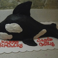Free Willy   Chocolate cake, covered in buttercream.Back & side fins made from fondant