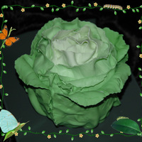 Cabbage After seeing a cabbage cake done by JankaT, I thought it was the perfect cake for my mother in law (she's a farmer). It's pound...