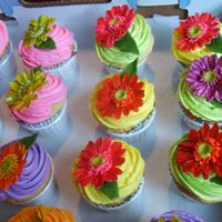 Gerber Daisies Cup Cakes fun colored gerber daisies for bridal shower, filled with raspberry cream and chocolate mousse