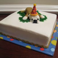 """winnie"" This birthday cake was made for a customer's father whose pride and joy is his bull dog, Winnie. 8"" square yellow cake covered in..."