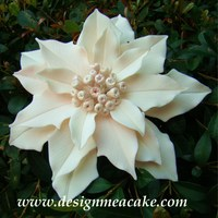 Snow Angel Gumpaste Poinsettia, Thanks for looking!......................Edna :)