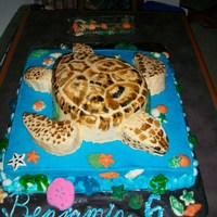 Sea Turtle Birthday Cake With inspiration from fellow CCers & pictures from my son, I was able to make his Sea Turtle cake. Body, arms, legs & head all...