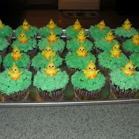 Easter/chick Cupcakes Chocolate cupcakes with buttercream with grass tip and buttercream chicks. I made over 100 of these!