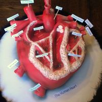 Heart Cake Gross?? Absolutely!! This is by far one of the weirdest cakes I have ever made. I received a request for a heart cake for a science project...