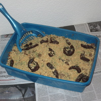 Kitty Litter Cake   At the time we didn't have a cat.. You should have seen the look on his face when he saw it. Well worth it.