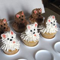 "Puppy Cuppies  I tried the brown puppies using a leaf tip and the white puppies using a ziplock with tape reinforced corner and ""M"" cut that I..."