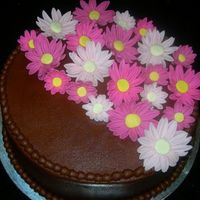 Pink Daisies Choc. b/c with pink fondant daisies.