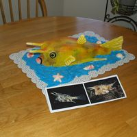 Longhorn Cowfish This is probably the weirdest cake I have ever made. My neighbor asked if I could create a cake like this for his wife since she was...