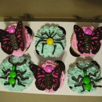 Butterfly And Bug Cupcakes  These were for a play group. WASC cupcakes with buttercream icing and chocolate transfer butterflies and bugs (thanks ncbert for the...
