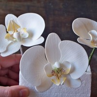 Moth Orquids My first attemp to moth orchids 50/50 fondant-gumpaste