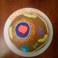 Animal Cell  Helped friends son make this animal cell cake for science project...... grade A++ teacher loved idea and class loved when they ate the cake...