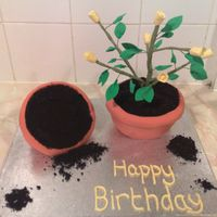 Flower Pot Cake this cake was made for my boyfriends moms birthday. i baked the cakes in basins, both were chocolate cakes with chocolate buttercream. iced...